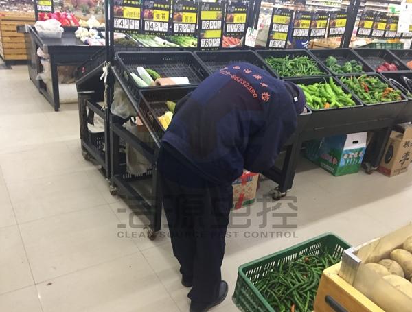 超市灭蟑螂
