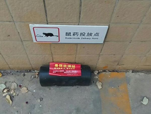 陕西灭鼠公司