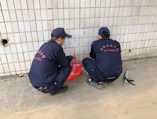 陕西专业灭鼠公司