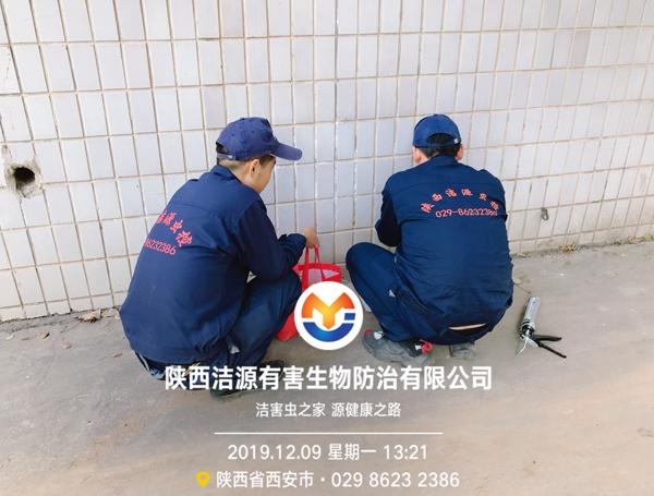 西安专业灭鼠公司