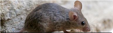 乐虎国际网址灭鼠公司